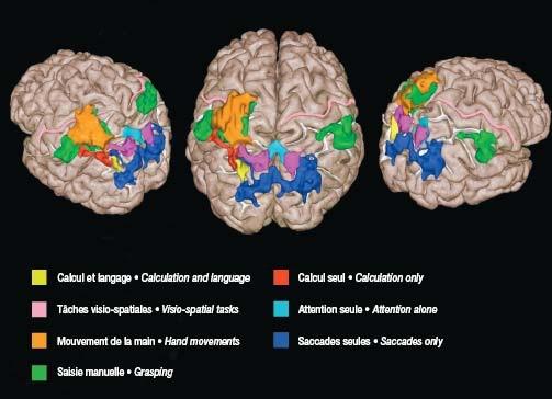 activité cerveau fonction tache