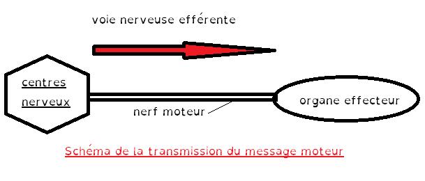 schema de transmission du message moteur