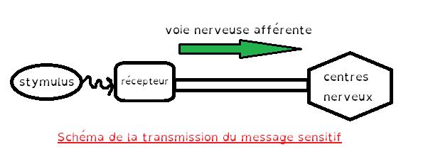schema de transmission du message sensitif