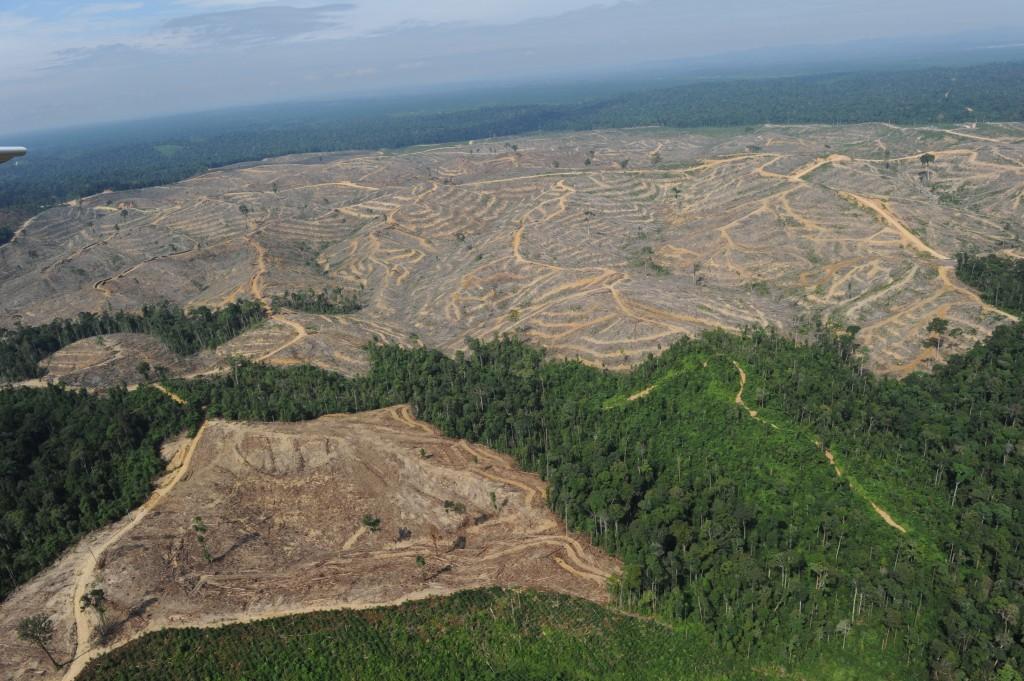 sumatra_deforestation1