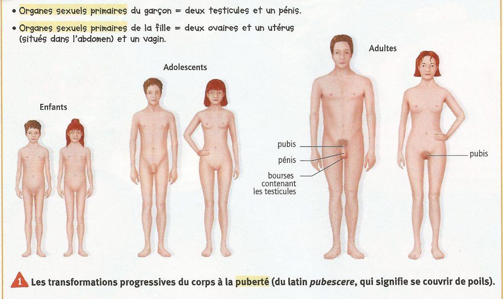 planche-transformation-fille-garcon-enfant-adulte